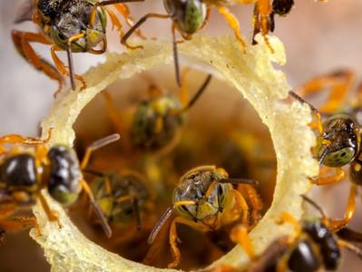 03 de Outubro: Dia Nacional das Abelhas