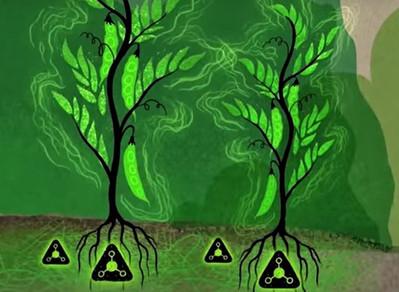 Como as árvores se comunicam