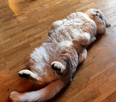 Garfield 1.jpg