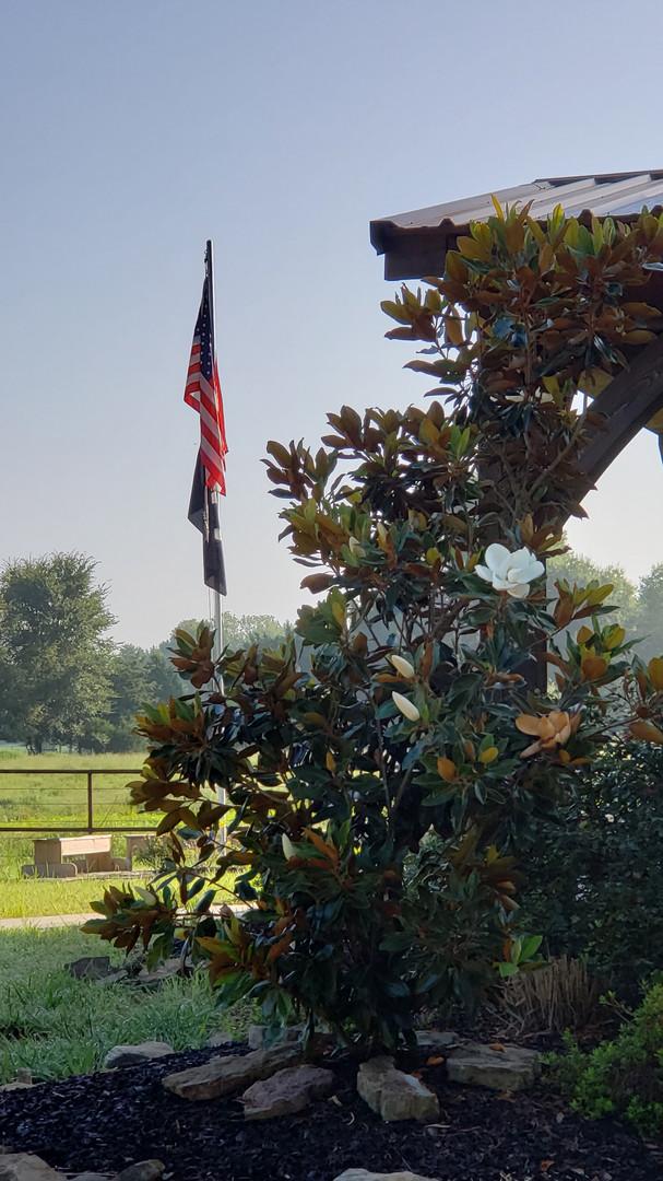 magnolia and flag.jpg