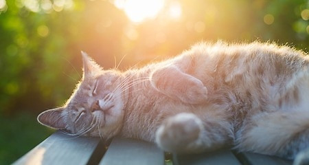 4 Things You Can Do At Home When Your Pet Has Heat Stroke