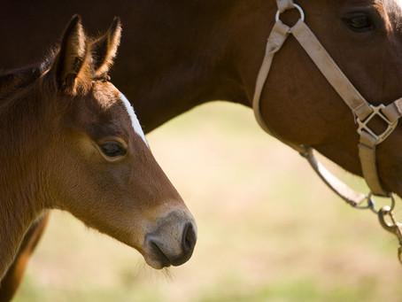 5 Top Emergencies For Horses