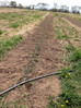 Peas Up, Beans In, Hurdles Leaped