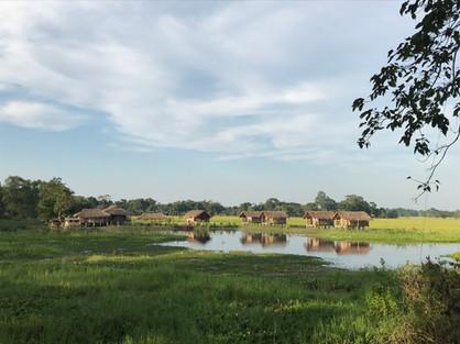 Mishing huts in Majuli