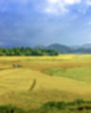 Ziro Valley_Papiya Banerjee_shutterstock