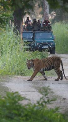 Jeep safari in Kaziranga National Park - tiger spotting