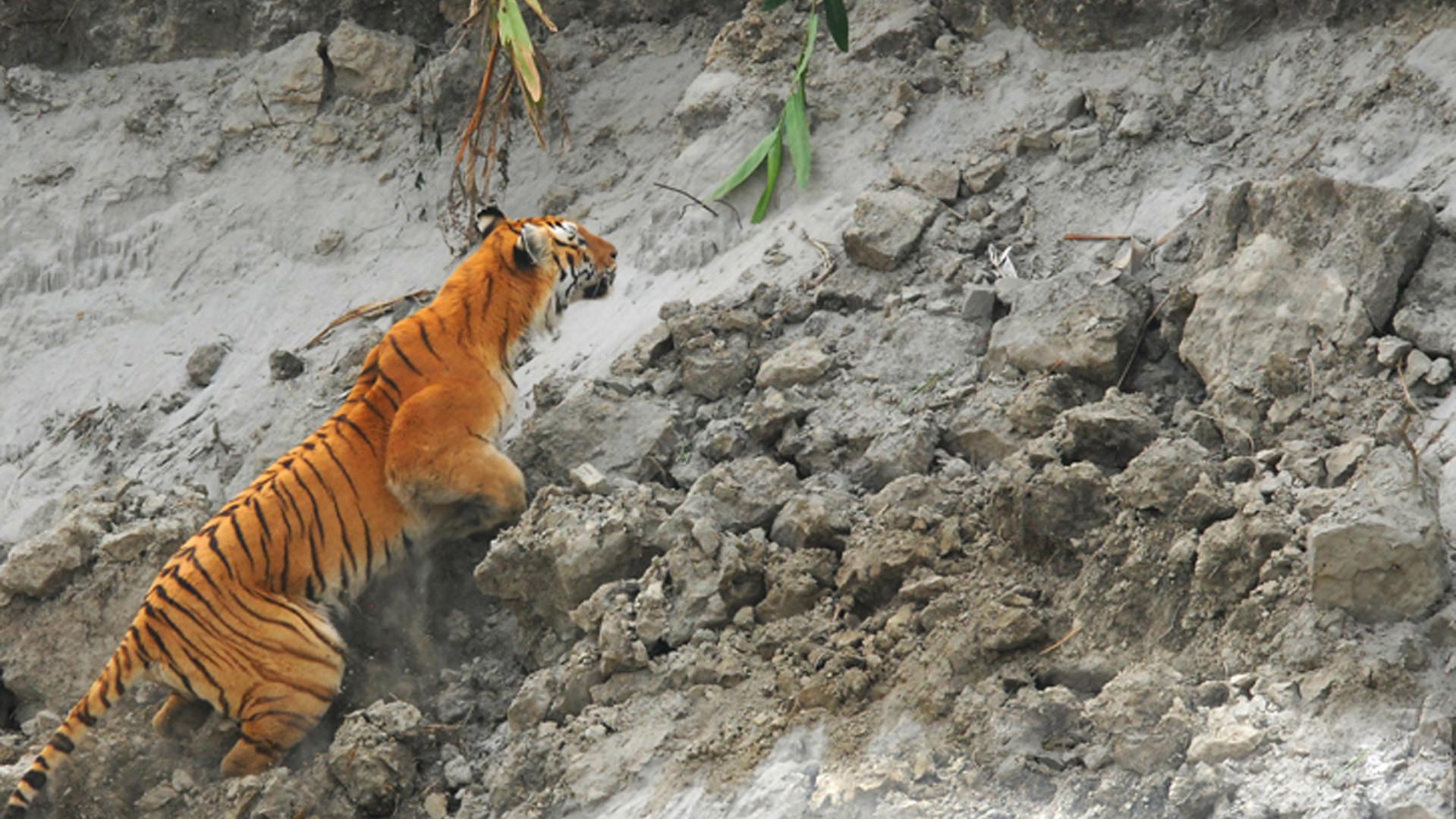 Tiger Spotting at Kaziranga.jpg