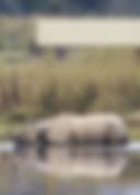 Diphlu River Lodge brochure cover.png