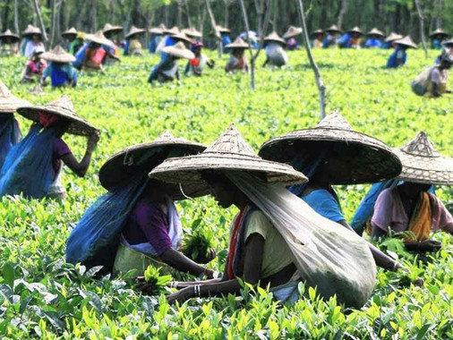Tea-Estate.jpg