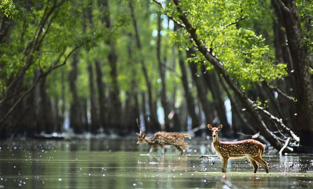 Sundarbans cruise