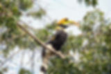 Hornbill birding tour by Jungle Travels India