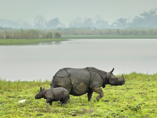 rhino with baby.jpg