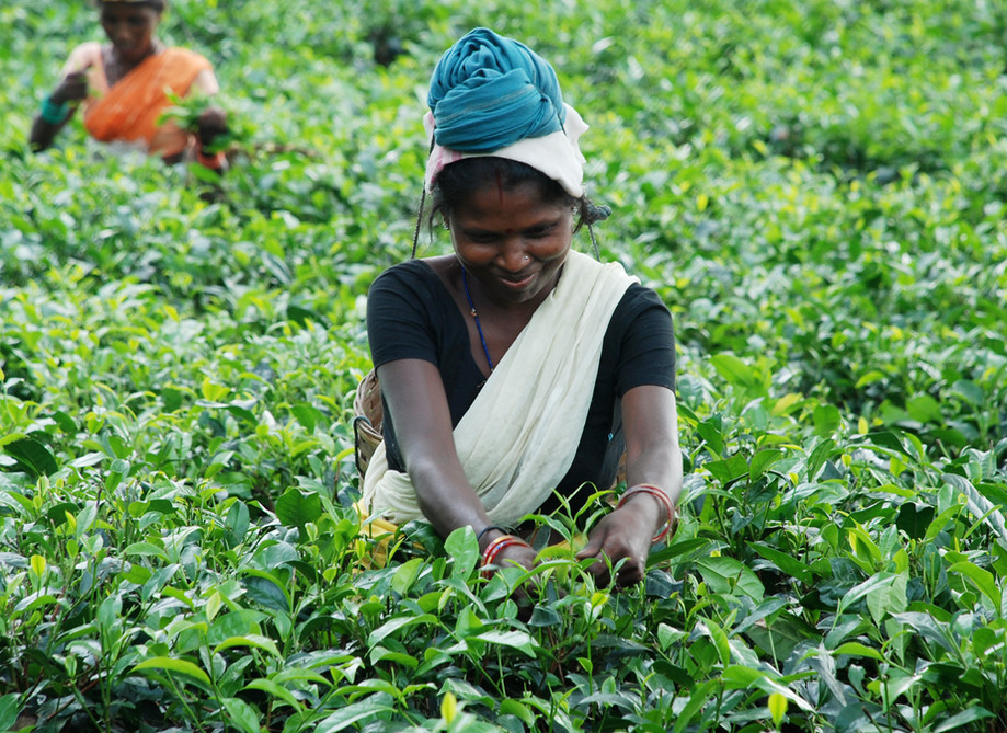 Tea garden visit