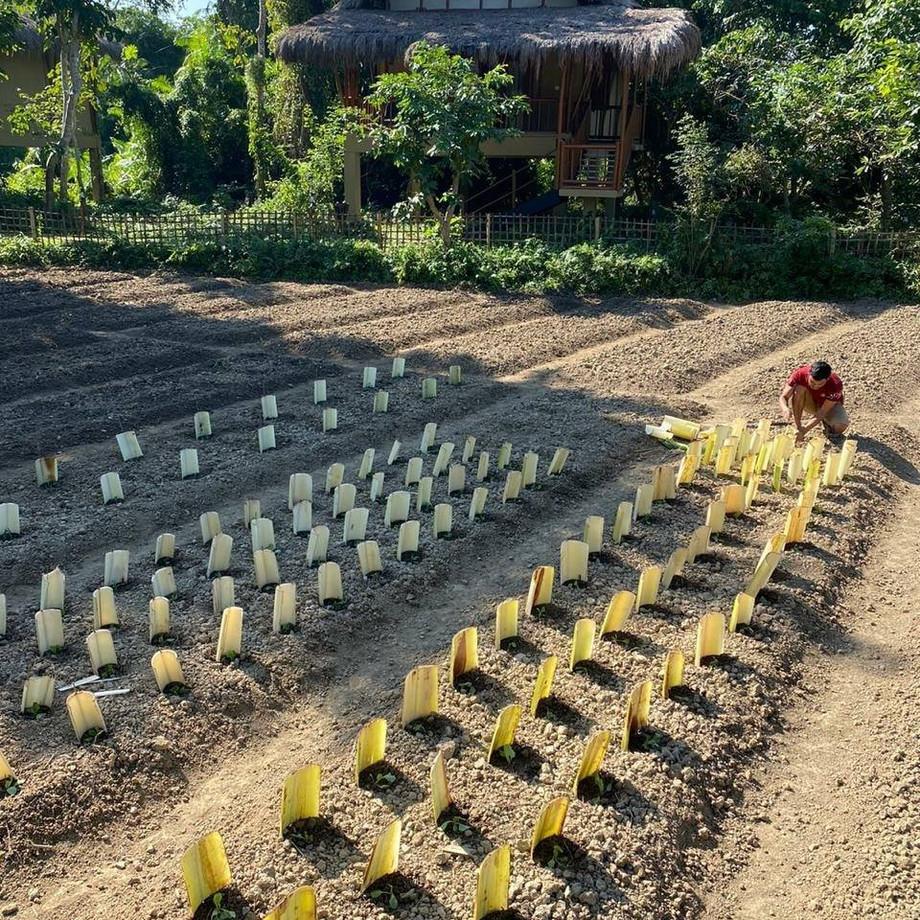 Organic farming at Diphlu River Lodge