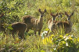Assam and Arunachal Pradesh wildlife and birding tour