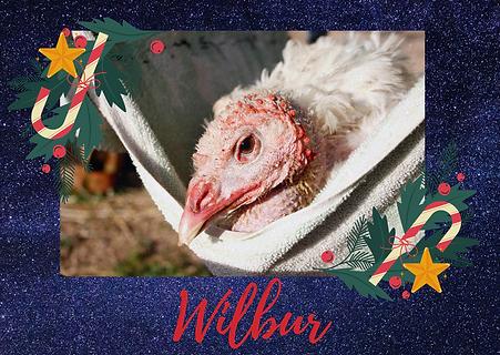Wilbur, un pavo paralítico