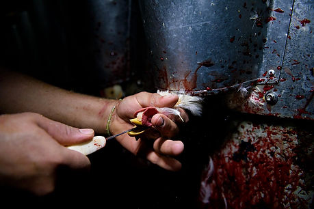 matadero-pollos.jpg