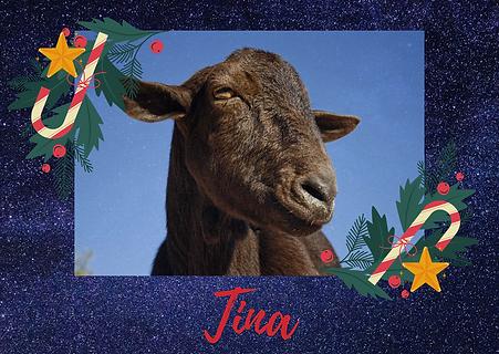 Tina, una cabra con artrosis