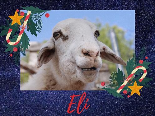 Eli, una oveja con epilepsia