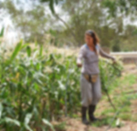 home gardening curacao