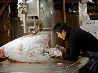 Tsukiji_Enkelmann_13.jpg