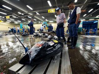 Tsukiji_Enkelmann_01.jpg