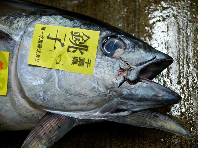 Tsukiji_Enkelmann_03.jpg