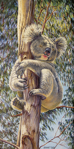 home among the gum trees-Janet DayMOS