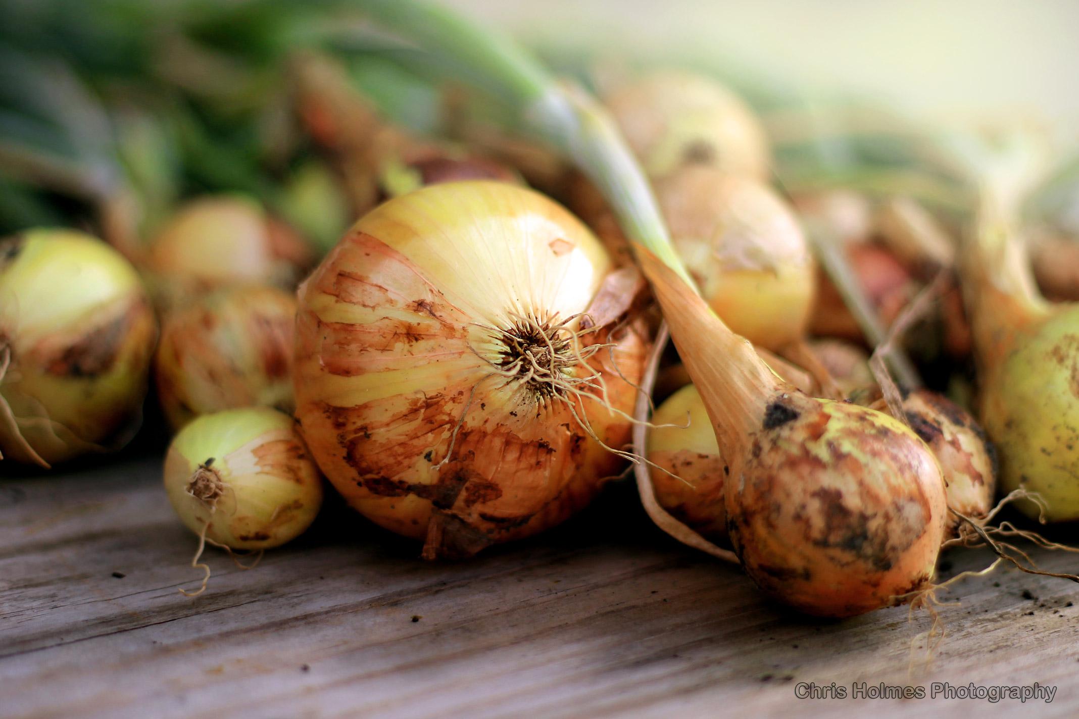 Onions-01.jpg