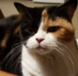 Tierkommunikation Ulrike Birkemeyer - Angebot Sterbebegleitung