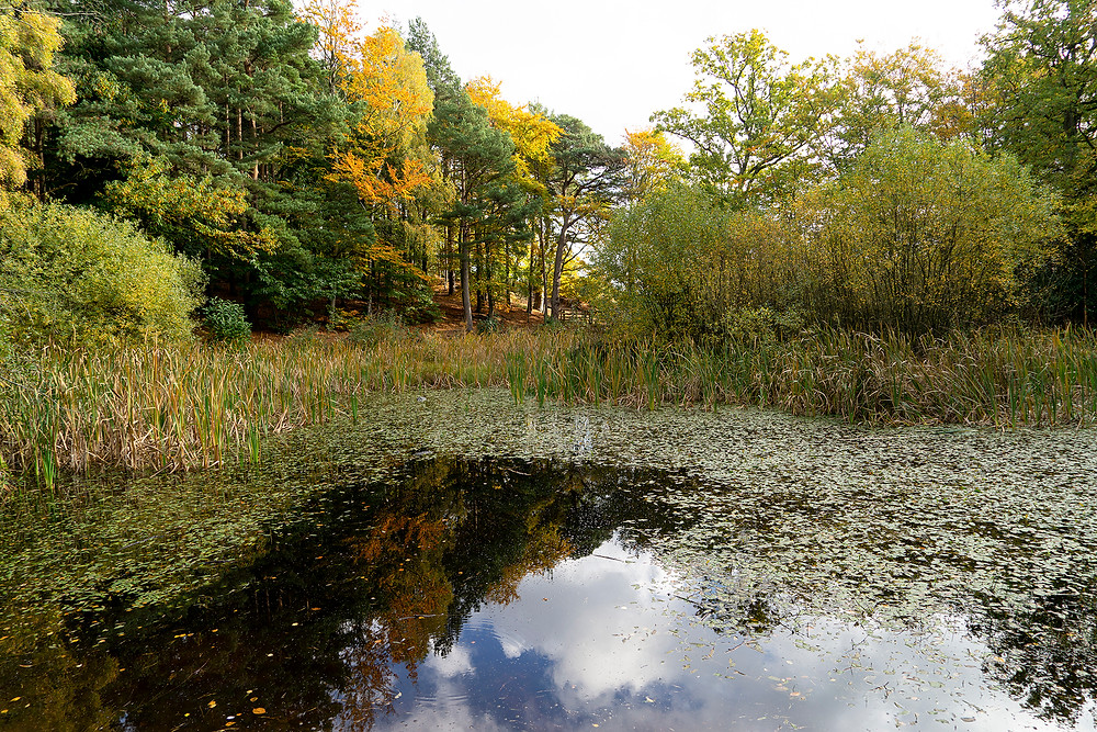 Holt Country Park   Norfolk Photographer   Norwich Photographer   Gemerations Photography