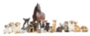 AdobeStock_114544498.jpeg
