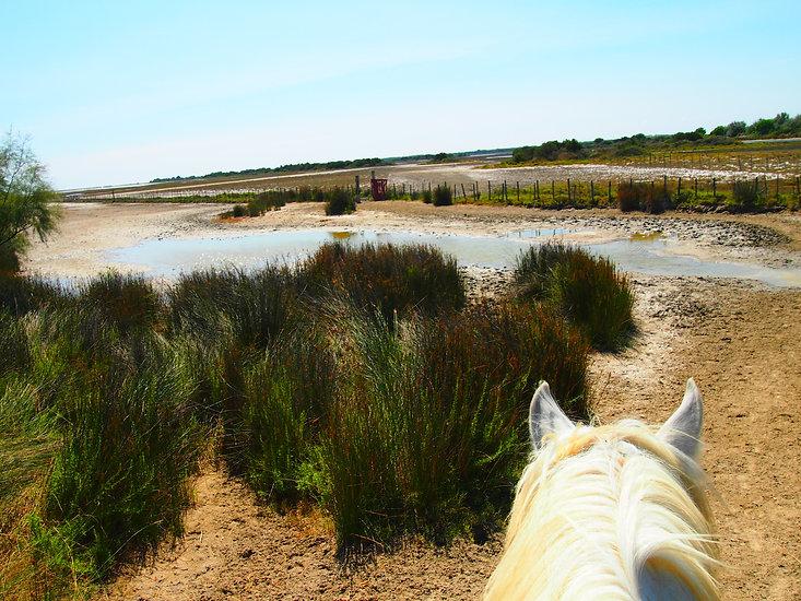 Promenade à cheval en camargue près saintes maries de la mer. Balade pour cavaliers débutants et confirmés. Galop.