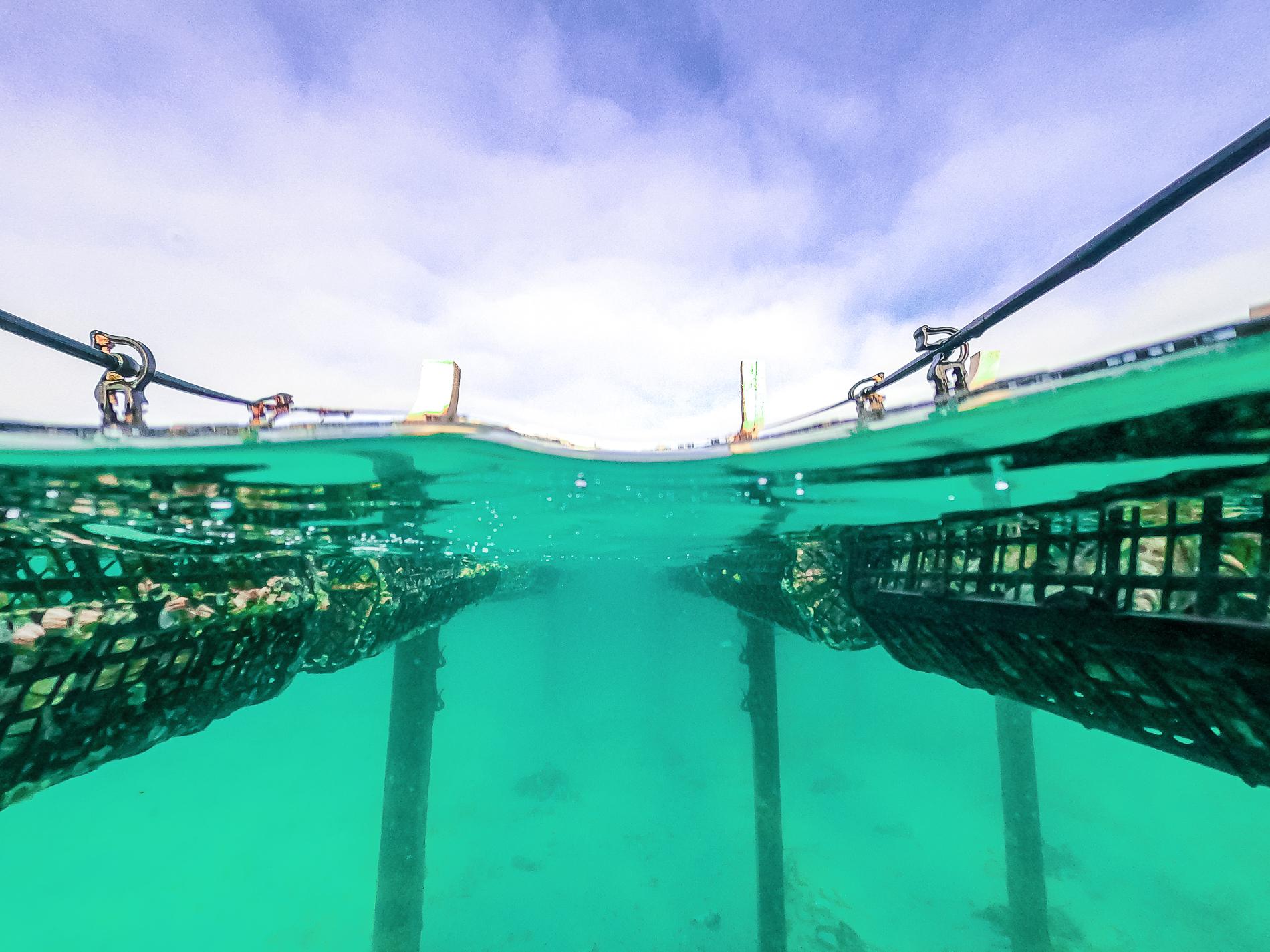 GazandeGazander Oystersr Oysters - For Web-103