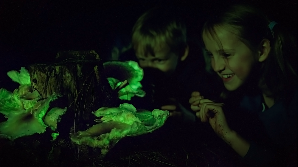 Ghost Mushrooms glowing at night