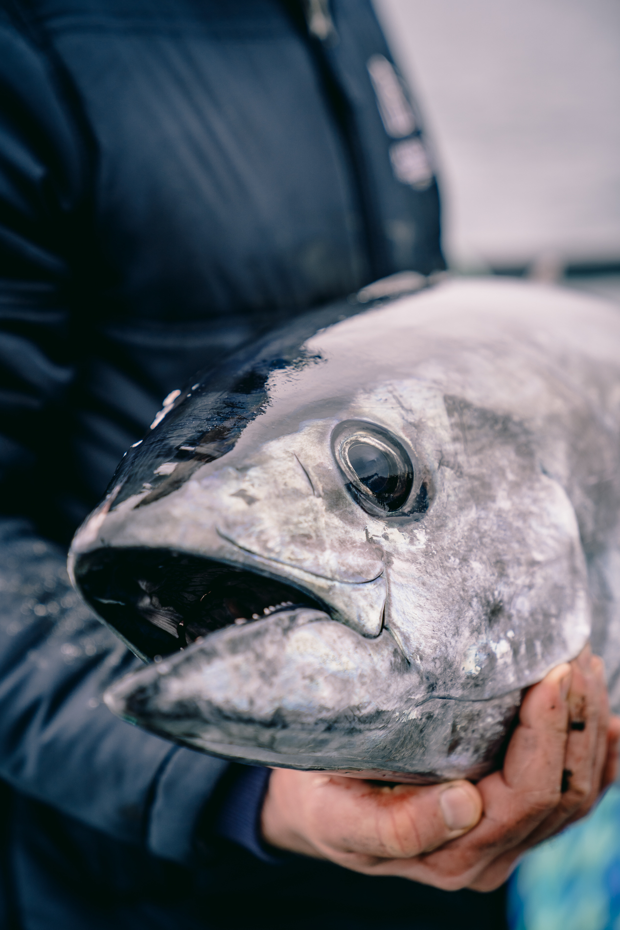 Marketing images for a Port Lincoln Tuna company