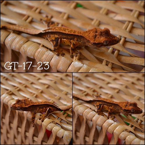 GT-17-23 SOLD EG