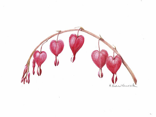 Note Card: Bleeding Heart