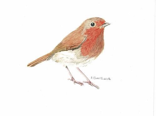 Christmas Card: Robin