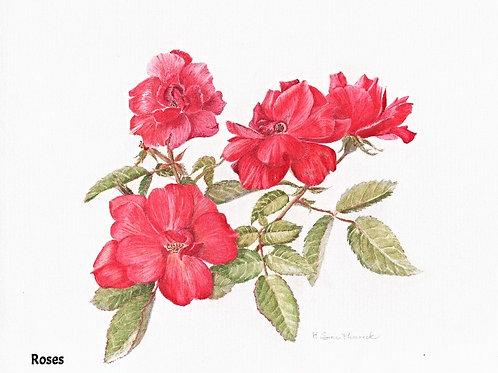 Note Card: Garden Roses