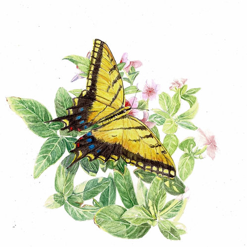 Note Card: Swallowtail on Busy Lizzie