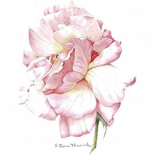 Original: Pink Garden Rose