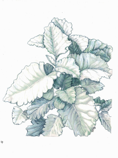 Note Card: Dusty Miller