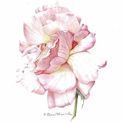 Note Card: Pink Rose
