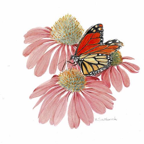 Original: Monarch Butterfly on Coneflower