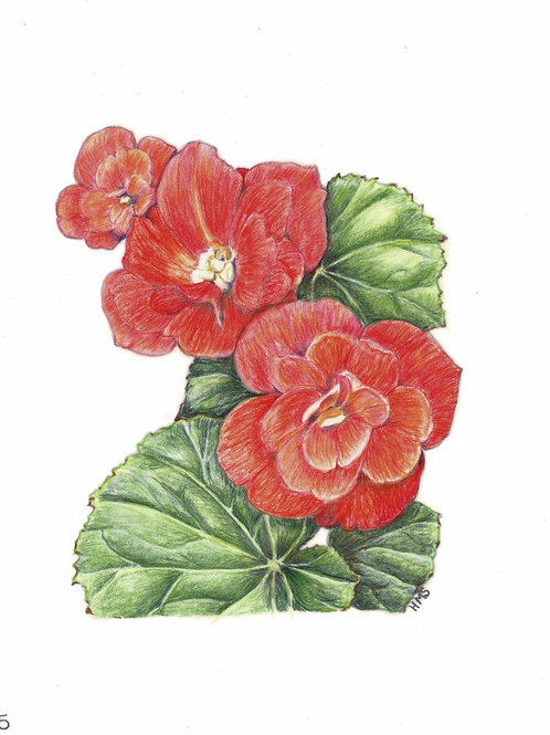 Note Card: Begonia