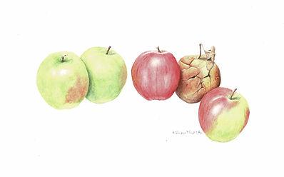 One rotten apple.jpg