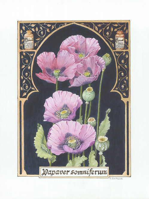 Note Card: Opium Poppy