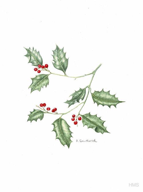 Christmas Card: Holly