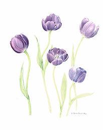 5 Purple tulips.jpg